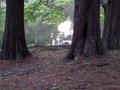 2011年5月撮影 神代植物園