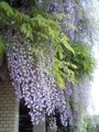2014年5月撮影 神代植物園