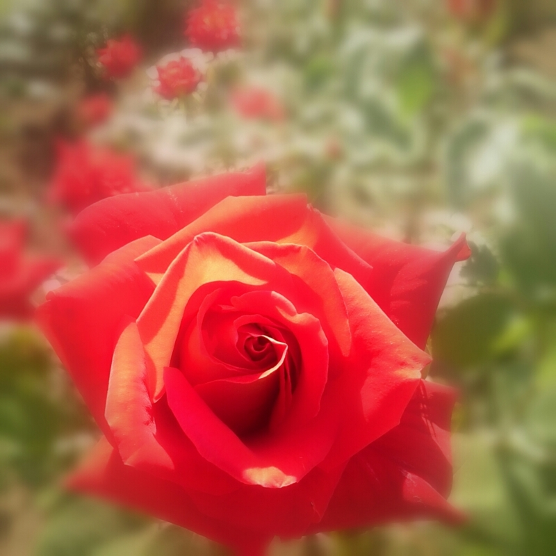 f:id:jerich:20150508214632j:image