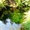 2015年5月撮影 井の頭自然文化園