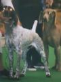 11月1日は犬の日だから犬画像111枚貼るよ