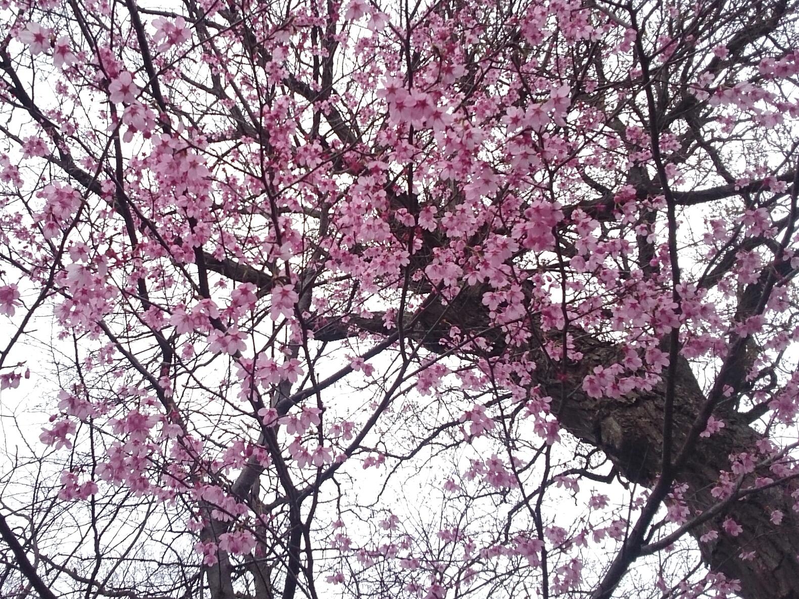 2017年4月撮影 立川