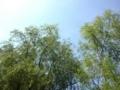 2017年6月撮影 野川公園