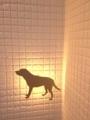 犬看板集合! 番外1