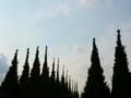 2017年6月撮影 神宮外苑いちょう並木