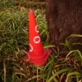 竹やぶで失くしたカラーコーンがあんなところにw