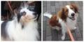 犬とイベント!「医獣祭」
