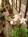 2018年3月撮影 江戸東京たてもの園