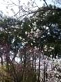 2018年3月撮影 小金井公園