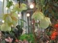 2018年5月撮影 神代植物公園