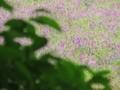 2018年5月撮影 立川