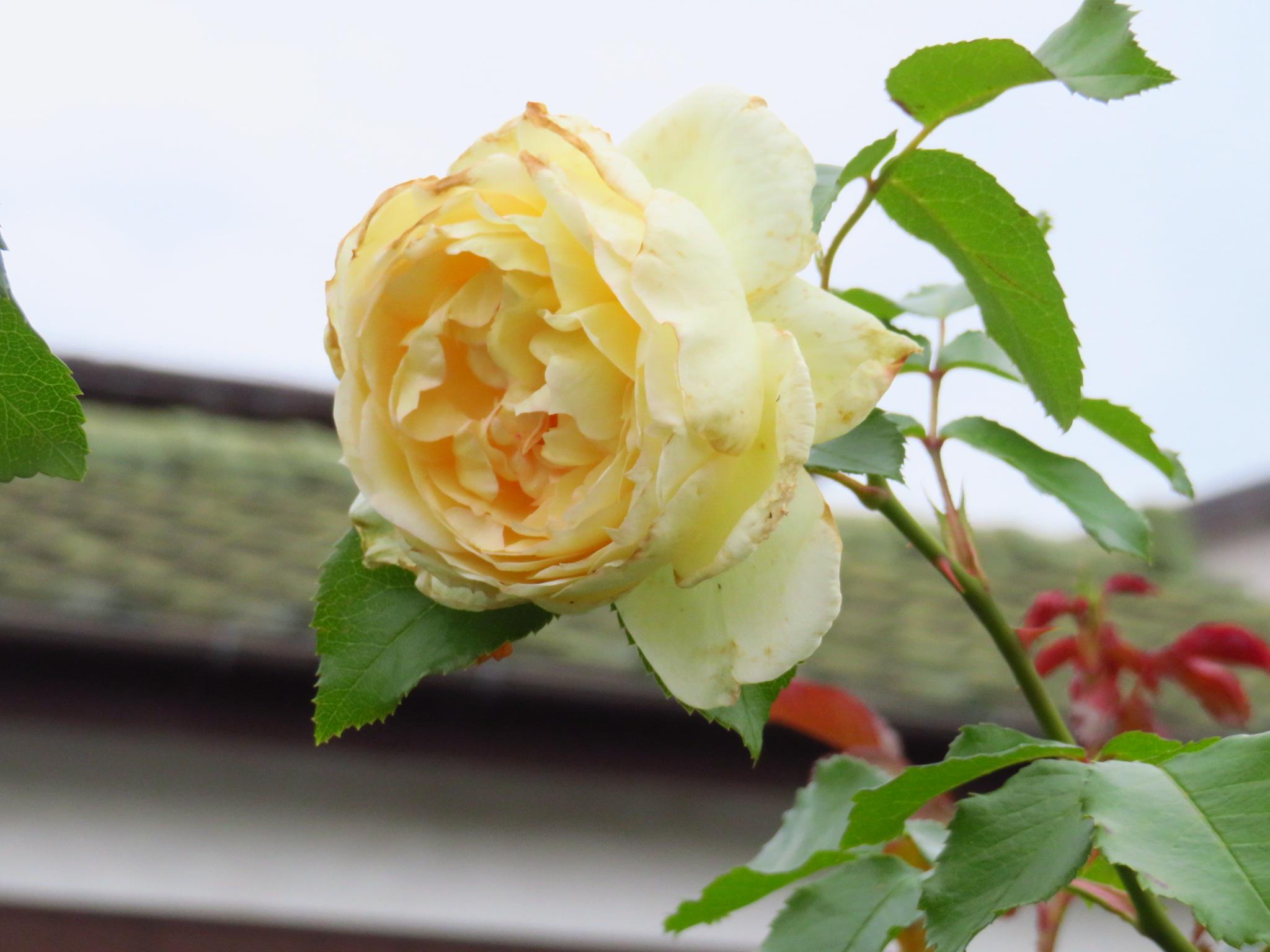 2019年6月撮影 立川