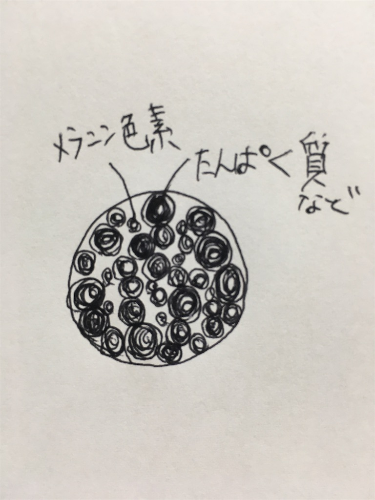 f:id:jericho_zaitsu:20180611213509j:image