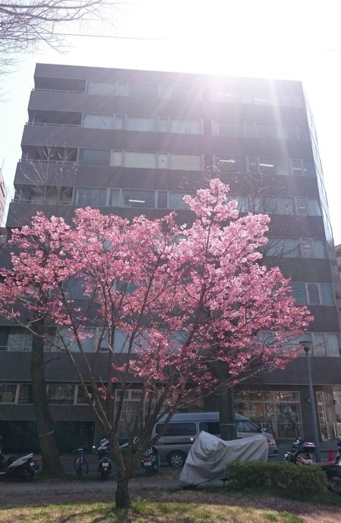 f:id:jesd_shinyokohama:20170413134318j:plain