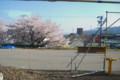 [桜][風景]