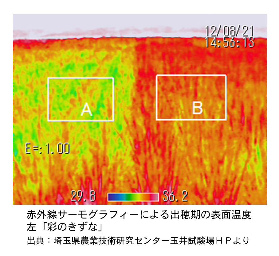 f:id:jiajiawarabi:20201227145137j:plain