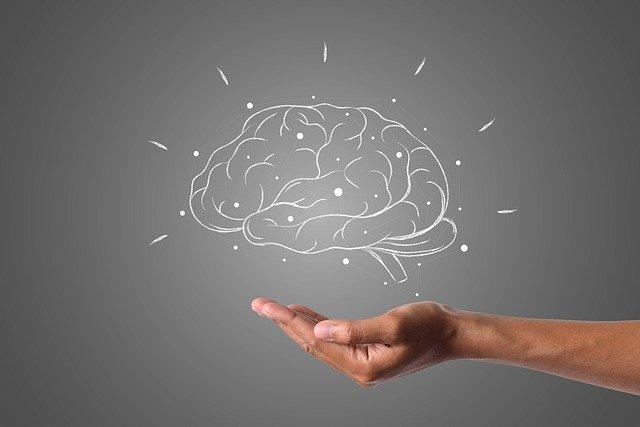 脳 インプット