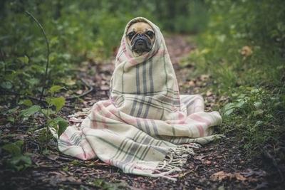 毛布にくるまった犬