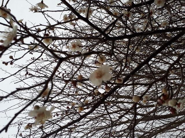 f:id:jibun-kiiro:20180313061424j:image