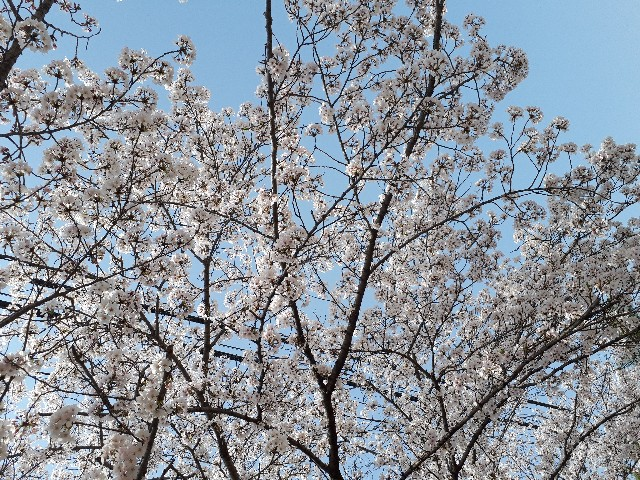 f:id:jibun-kiiro:20180423100855j:image