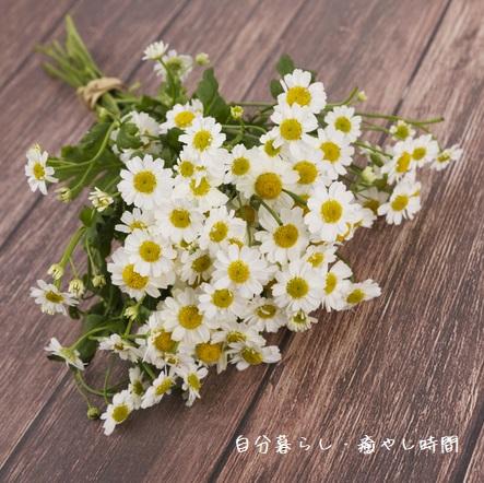 f:id:jibun_iyashi:20210612153822j:plain