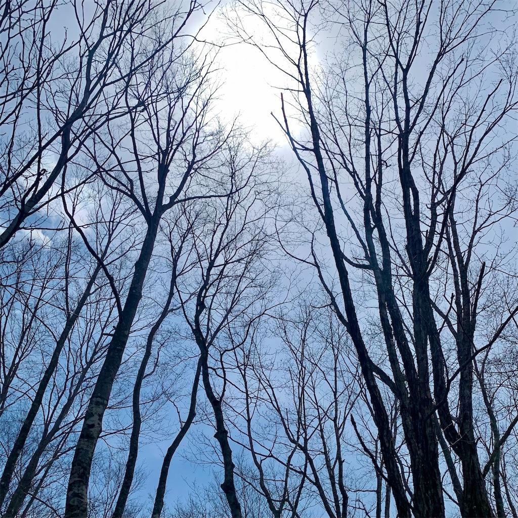 f:id:jibunrashikuikirujinsei:20210517125521j:image