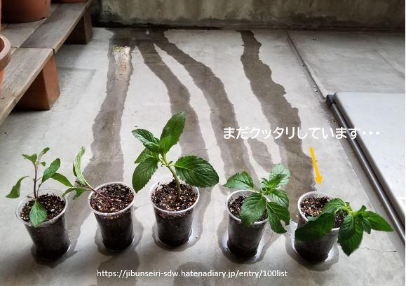 f:id:jibunseiri_sdw:20200427044543j:plain