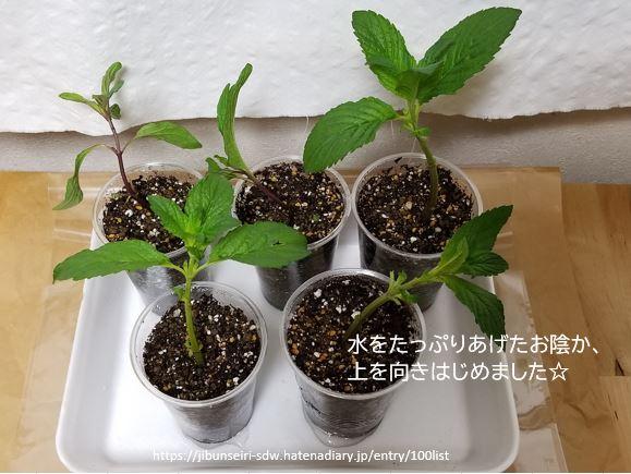 f:id:jibunseiri_sdw:20200427044650j:plain