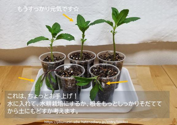 f:id:jibunseiri_sdw:20200427044723j:plain