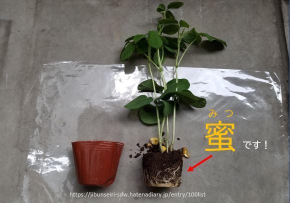 f:id:jibunseiri_sdw:20200507184122j:plain