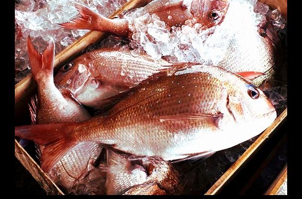 漁獲量7年連続日本一の天然真鯛など糸島市は海・山・平野の美食が豊富