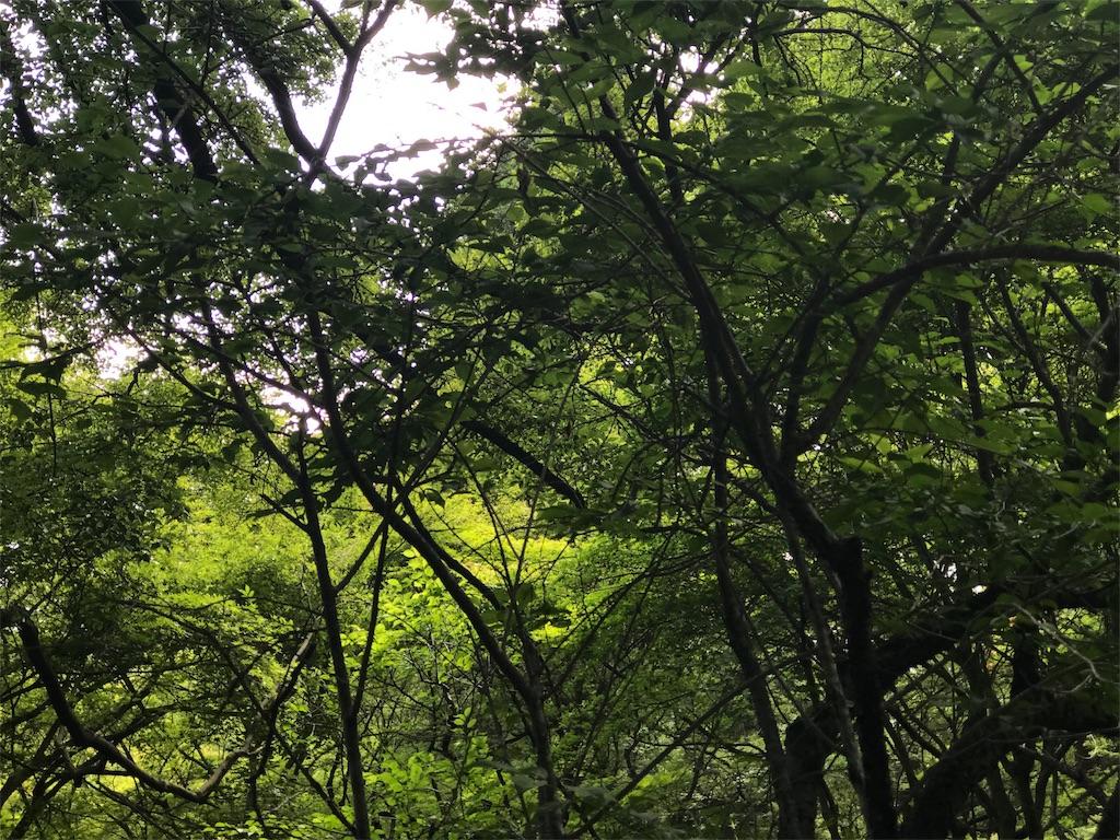 f:id:jidaraku91:20170603230526j:image