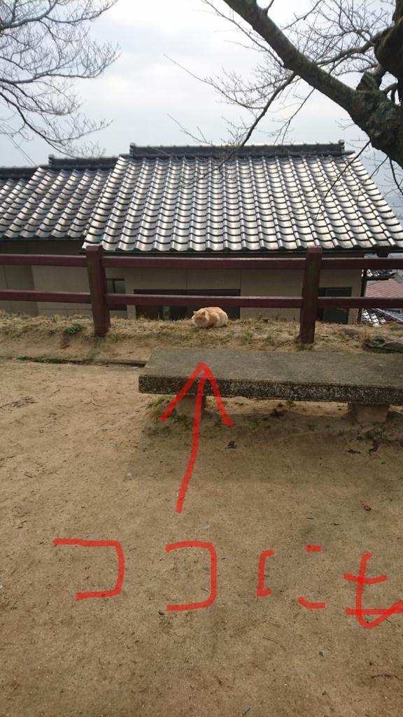 千光寺 千光寺山 猫 ネコ その6