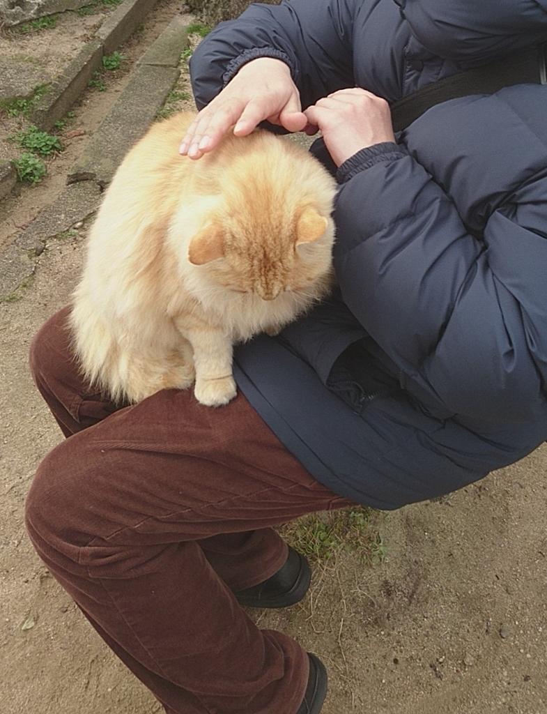 千光寺 千光寺山 猫 ネコ