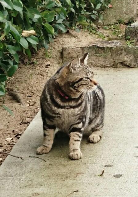 千光寺 千光寺山 猫 ネコ その1