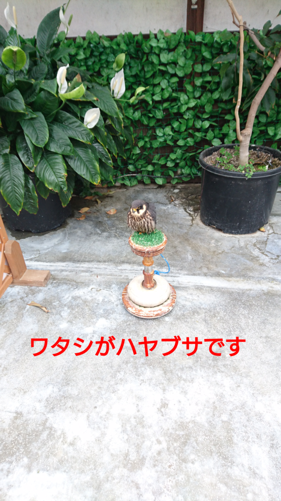 f:id:jijikokkoku:20170518074450p:plain