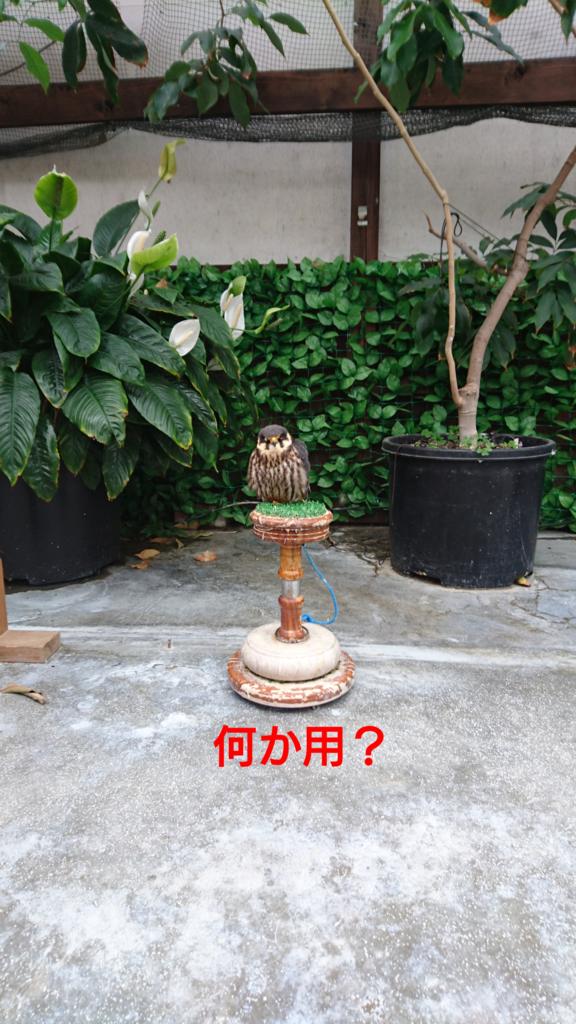 f:id:jijikokkoku:20170518074543p:plain