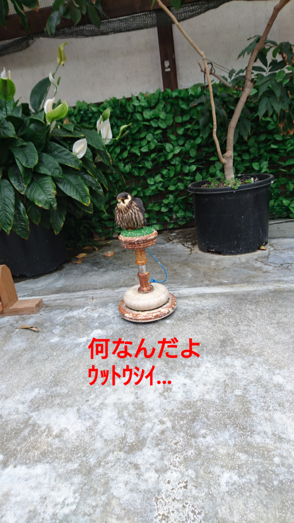f:id:jijikokkoku:20170518074635p:plain