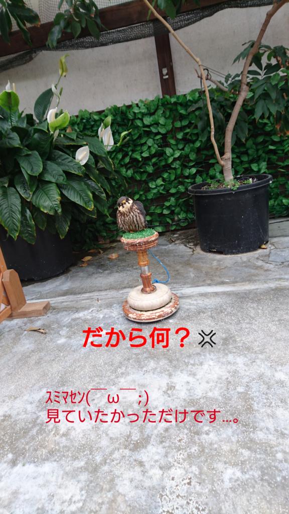 f:id:jijikokkoku:20170518074708p:plain