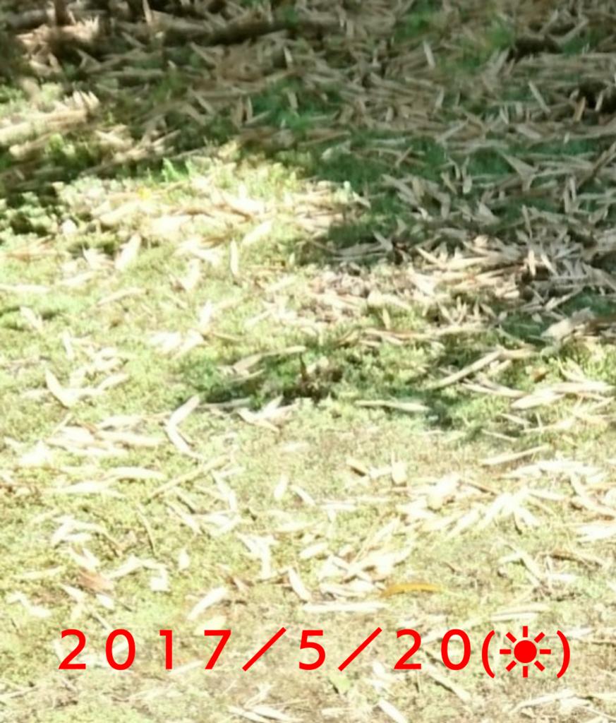 f:id:jijikokkoku:20170522080214p:plain