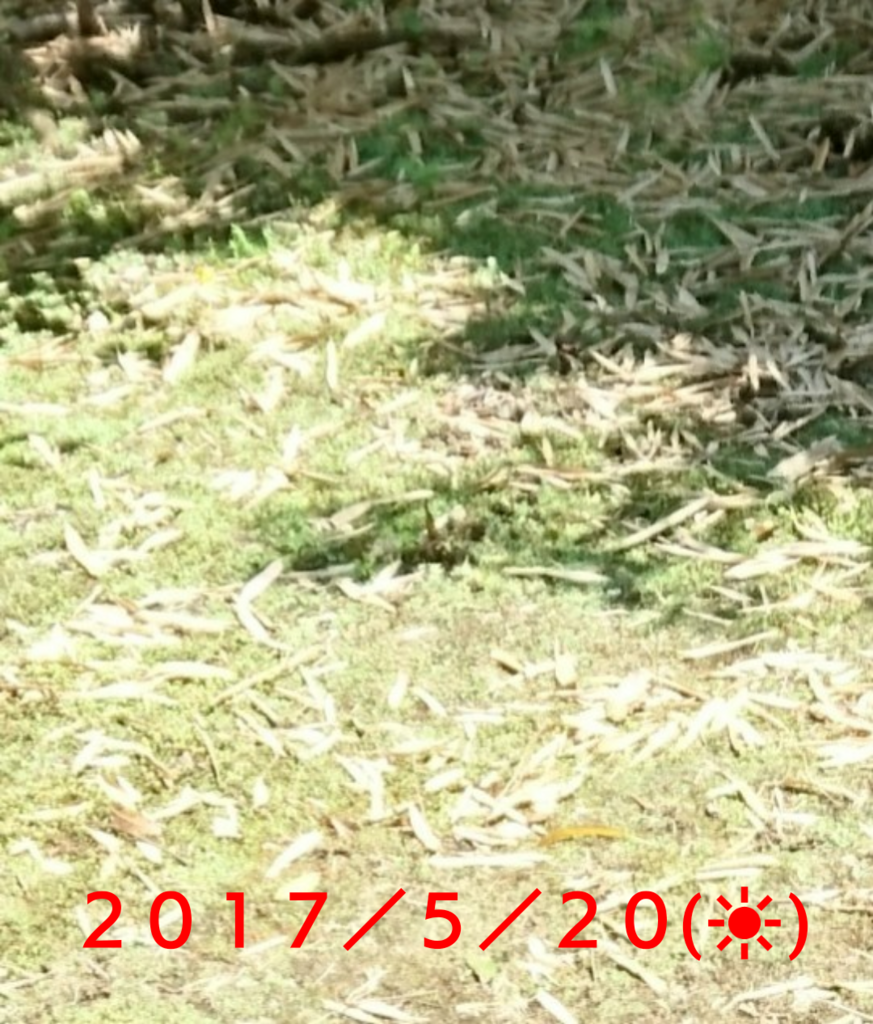 f:id:jijikokkoku:20170616163158p:plain