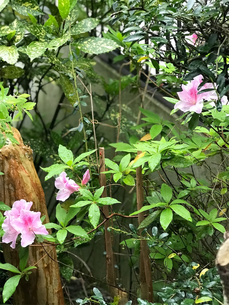 f:id:jijiro:20180418074221j:image