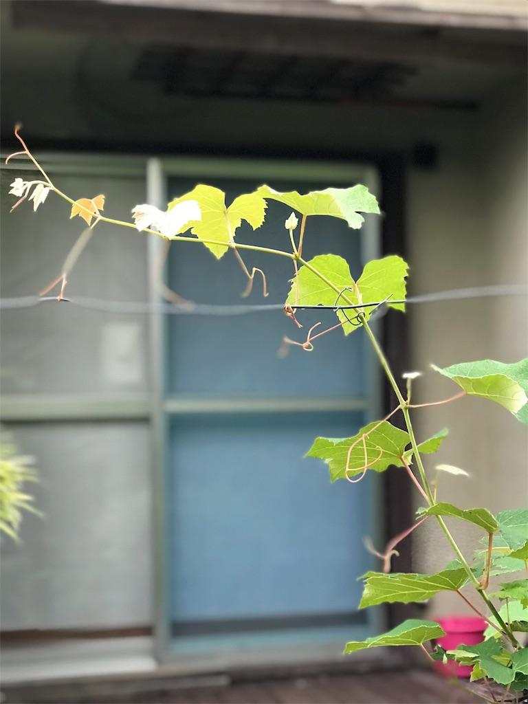 f:id:jijiro:20180616083508j:image