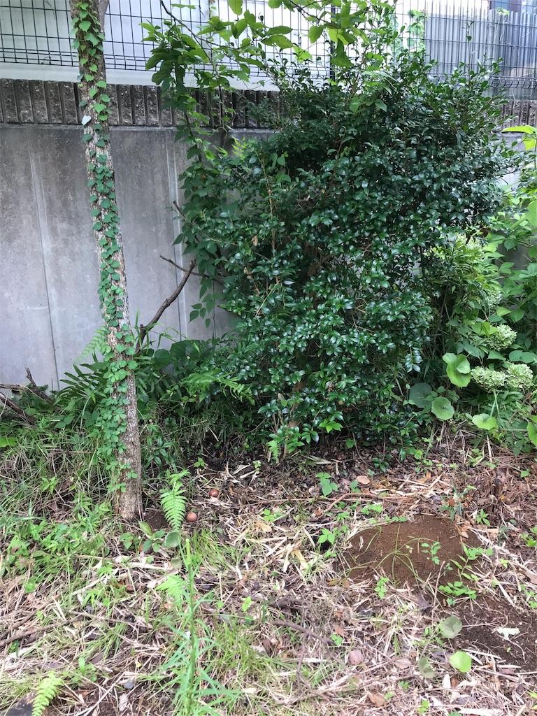f:id:jijiro:20180817093223j:image