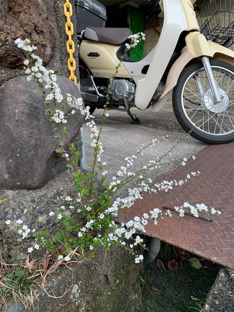 f:id:jijiro:20190318075749j:image