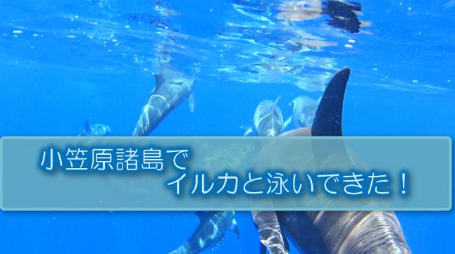 f:id:jikishi:20170824212326p:plain