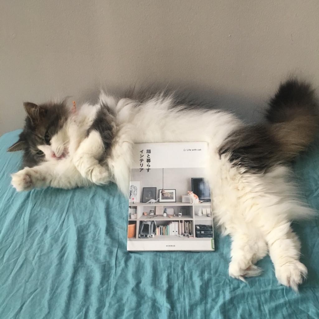 「猫と暮らすインテリア」とおばけちゃん(猫)