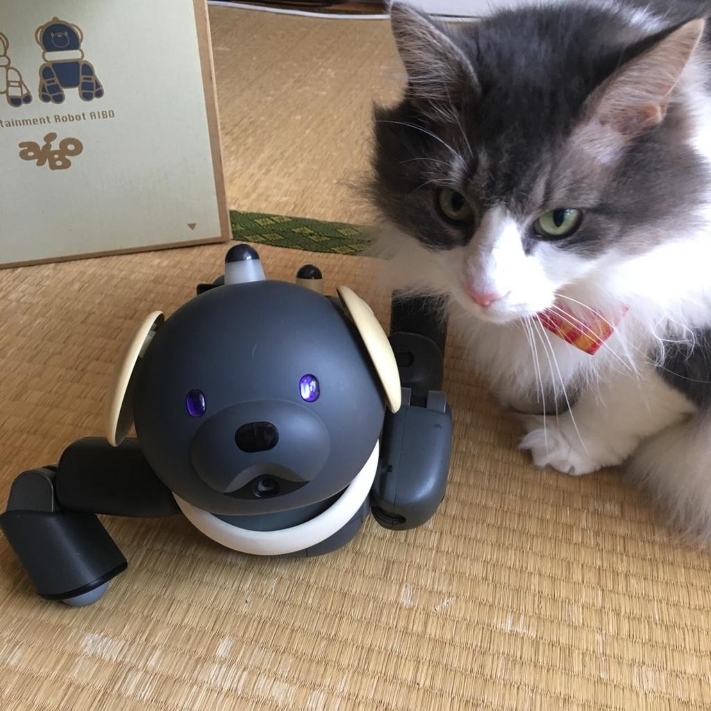 SONY,犬型ロボット,AIBO,ラッテ,マカロン,2001年,アイボ,クマイヌ