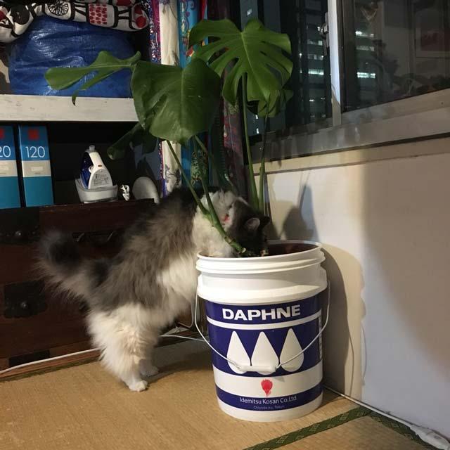猫の植木鉢の観葉植物いたずら対策決定版!超裏技◯◯を使えば0円!