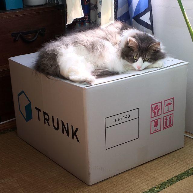 スッキリした部屋でゆったり暮らしたいから、TRUNK(トランク)を利用します